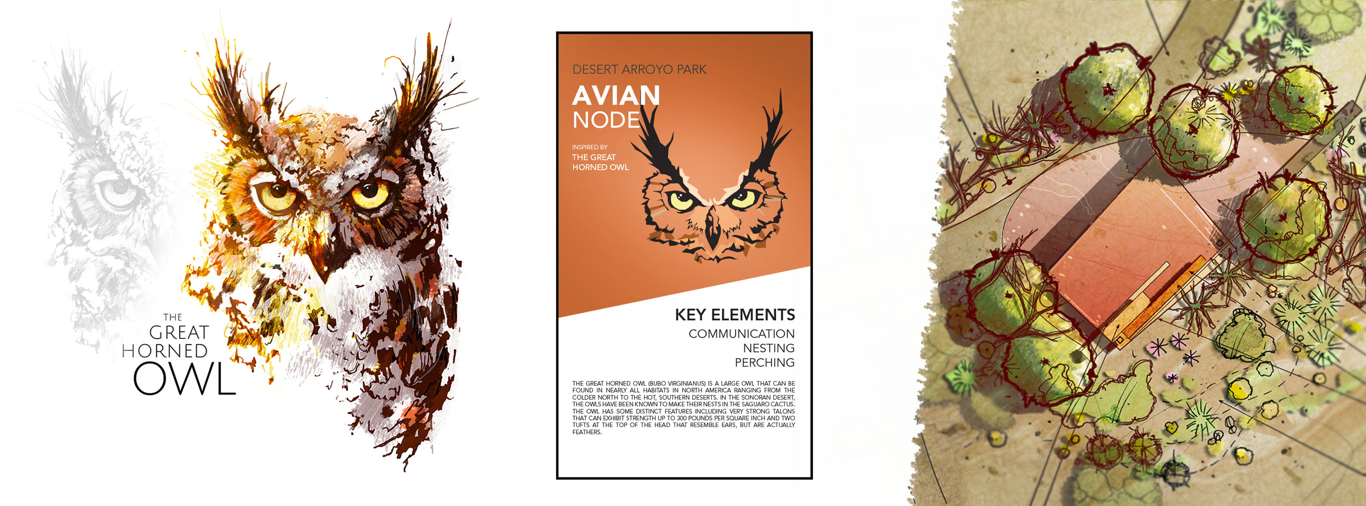 Avian graphics3
