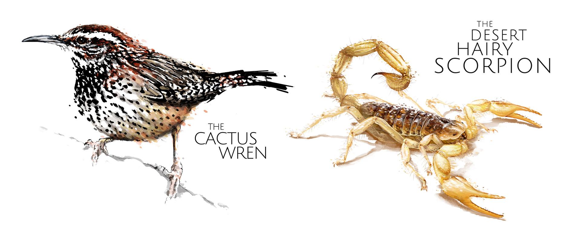 wren and scorpio
